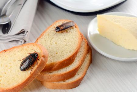 Kakkerlak op voedsel in de keuken. Het probleem zit in het huis vanwege de kakkerlakken. Kakkerlak eten in de keuken