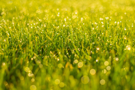 Drops on green grass with beautiful green bokeh background.