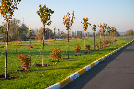 Spring planting of trees in the park along the road.