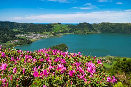Close up beautiful view of pink flowers to background lake. Azores, Sao Miguel, Portugal Stok Fotoğraf