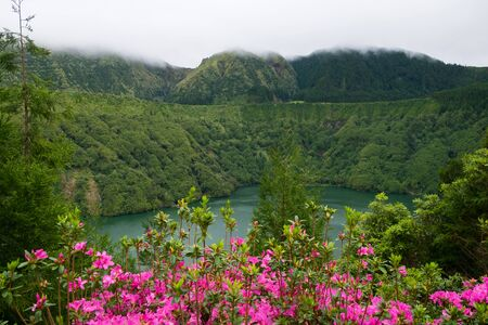 Close up beautiful view of pink flowers to background lake and foggy forest. Azores, Sao Miguel, Portugal Stockfoto