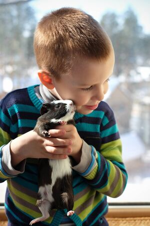 Cute child playing at home with his pet the guinea pig.
