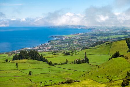 Beautiful view of the cows that graze in the meadow to background of the Atlantic ocean. Azores, Sao Miguel, Portugal