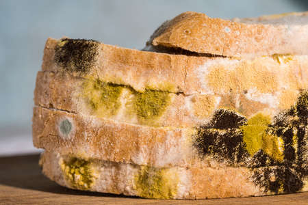 Mold growing rapidly on bread. Scientists modify fungus found on moldy bread into an anti-virus chemical.
