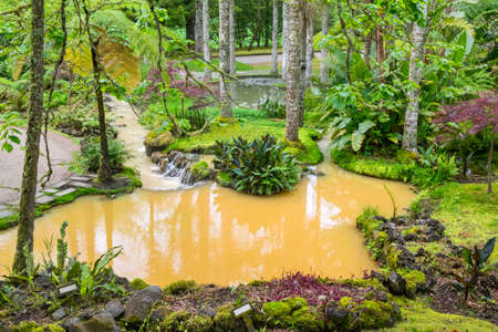 Beautiful colors of fantasy tropical garden with amazing plants, flowers and pond.