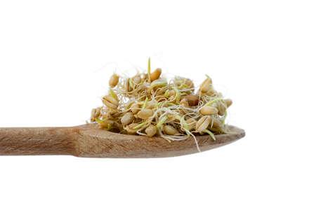 germinación: Gérmenes de trigo en la cuchara de madera, aislado más de blanco Foto de archivo