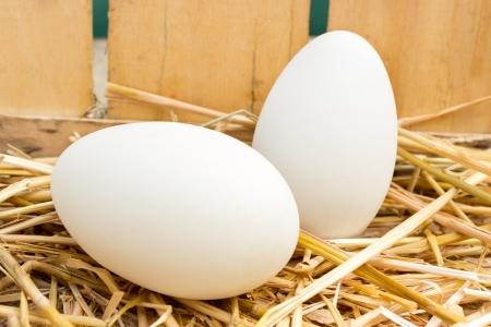 huevos de gallina en el nido de paja Foto de archivo