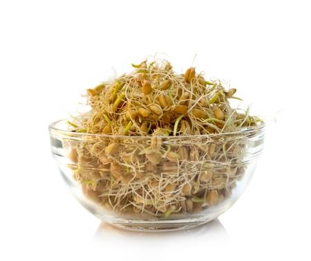 Weizenkeime in der Schüssel, bereit zum essen Standard-Bild - 20956194