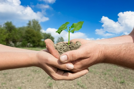 farm background: Hands of couple farmers holding young green plant, concept – farming family business