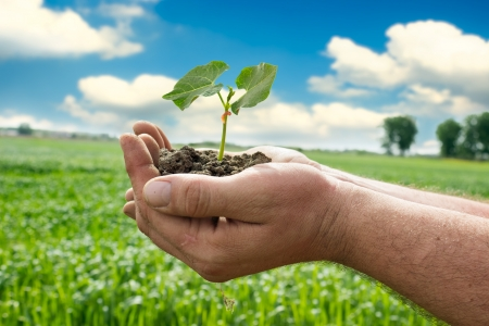 Farmer hand holding a fresh young plant, concept- agriculture