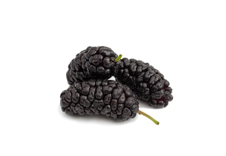 mulberry on a white background photo