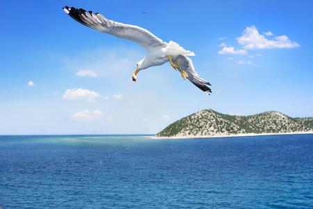 gaviota volando sobre el hermoso mar Foto de archivo