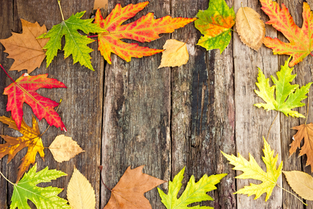 autumn colorful leaves on wooden board