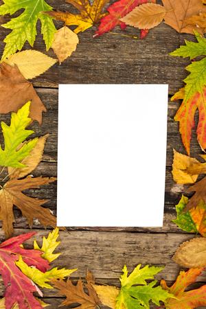 papel en blanco rodeado de hojas de oto�o