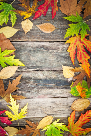Autumn leaves over wooden background, with copy space