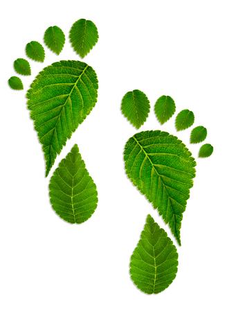 緑の葉から足をトレースします。