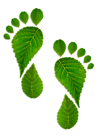 Trace foot from green leaves