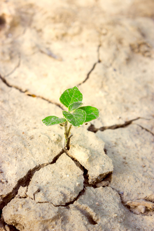 plant life: Green plant growing on cracked earth, hope in new life