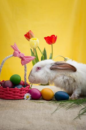 rabbit standing: White rabbit standing next to Easter basket Stock Photo