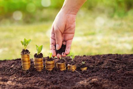 Main femme versant le sol sur la plante en croissance sur la pile de pièces