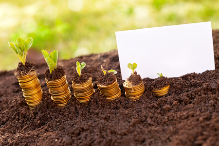 Rising golden coins on soil and clean empty paper