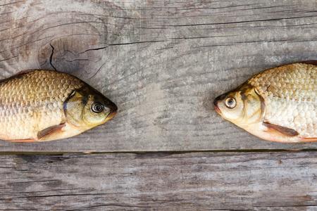 carassius gibelio: Two fresh carp fish on lying on the table