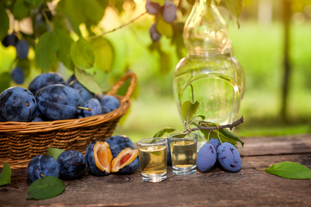 rakia: Traditional Serbian rakia slivovitsa in two shot glasses with cut open plums on the table