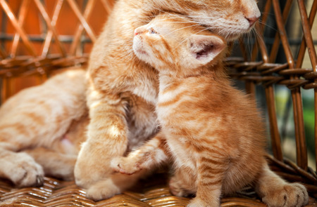 Little kitten and mother cat hugging in basket Standard-Bild - 104074819