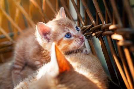 Cute little kitten in basket Standard-Bild - 104074820