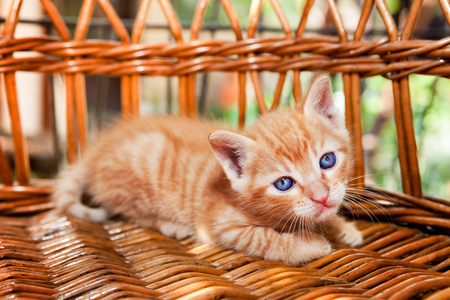 Little fluffy kitten lying in a basket Standard-Bild - 104074821