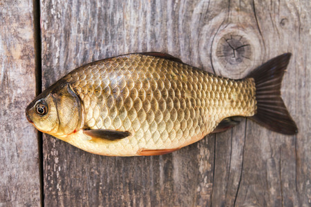 carassius gibelio: Fresh caught carp lying on a wooden table