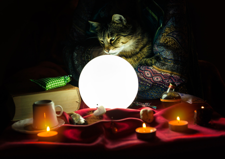 Cat in hand of fortune teller looking at crystal ball Stock Photo