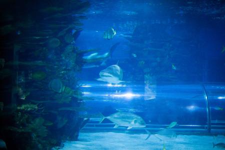 Shark and fish swimming in aquarium