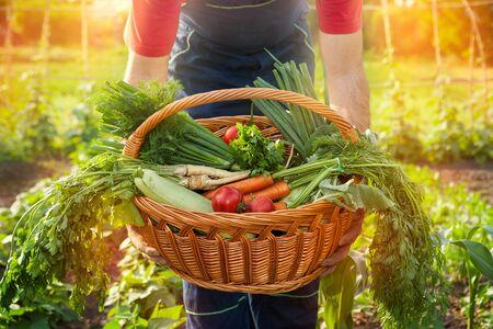 Farmer holding a basket full with fresh vegetables