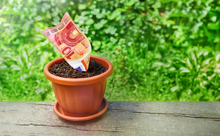 Growing money in flowerpots on wooden background, home budget