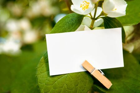 Close up of empty white paper for text writing hooked on leaf