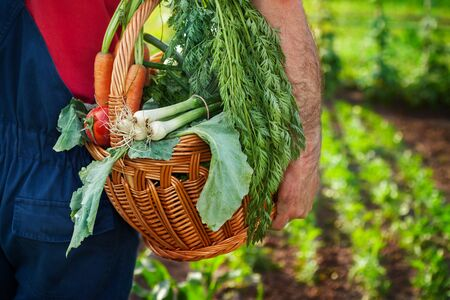 Farmer carrying basket full of fresh vegetables
