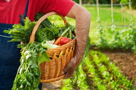 Farmer holding wicker basket full of organic vegetables