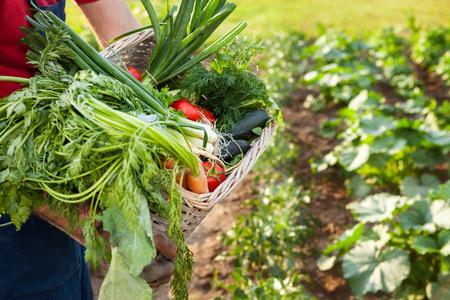 Gardener holding mixed vegetable in wicker basket in the garden. Stock Photo