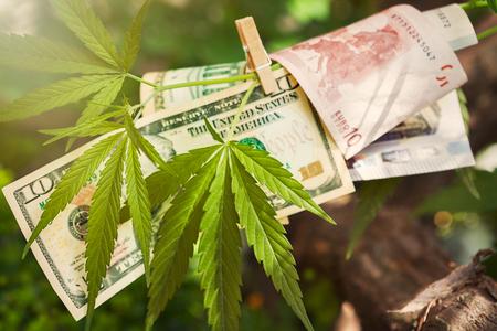 Cannabis leaf with hanged Euro and dollar bills on a branch Archivio Fotografico