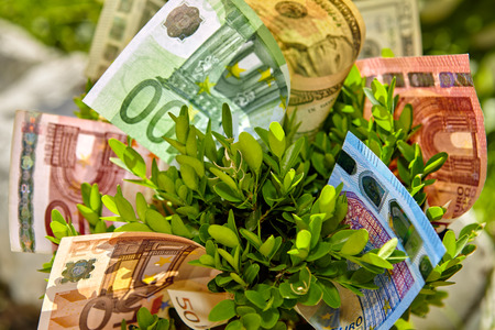 Close up of bush with euro and dollar money bills