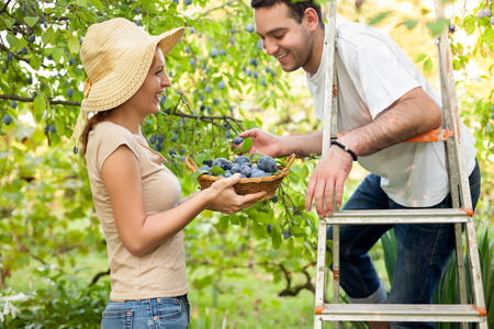 Young woman showing fruit basket to her friend