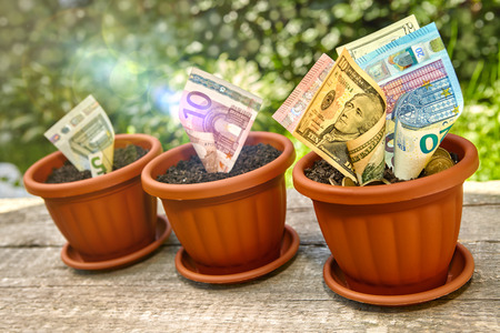 stack of dollar bill: Banknotes growing in flowerpot with soil and coins