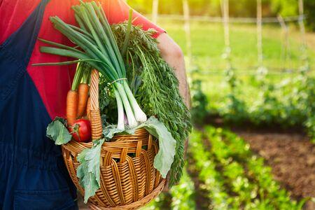 Gardener holding wicker basket full of organic vegetables
