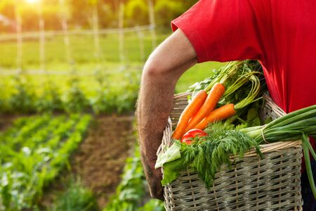 Man holding wicker basket with mixed organic vegetables