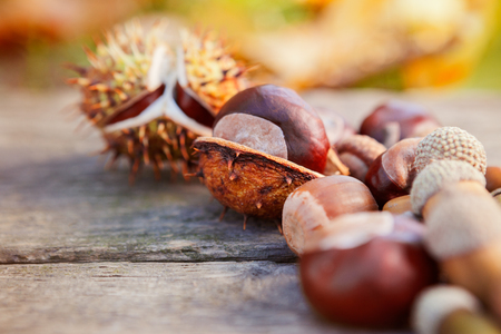 Close up of chestnuts on wooden surface.Autumn background.