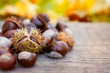 Different chestnuts on wooden background