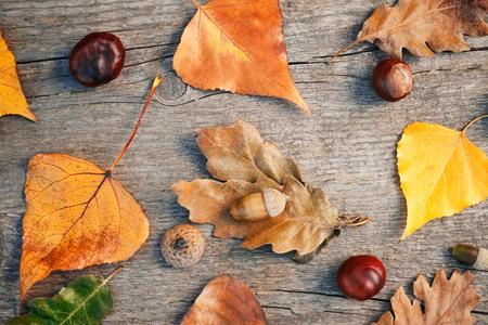 Herbsthintergrund mit bunten Blättern, Kastanien und Eicheln, Draufsicht Standard-Bild