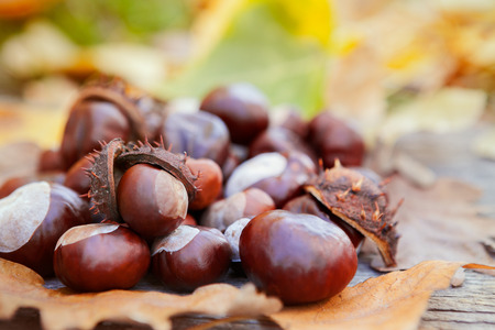 Different size of chestnuts with leaves on wooden background