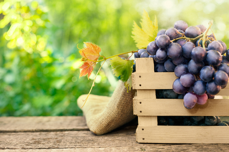 Fresh bunch of grapes on wooden surface